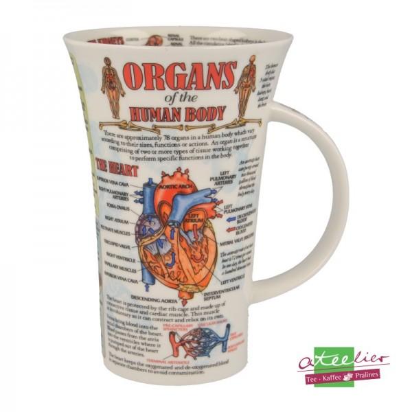 "Becher ""Organs of Human Body"", Glencoe, 0,5 l"